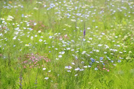 花咲く草原の写真素材 [FYI04135522]