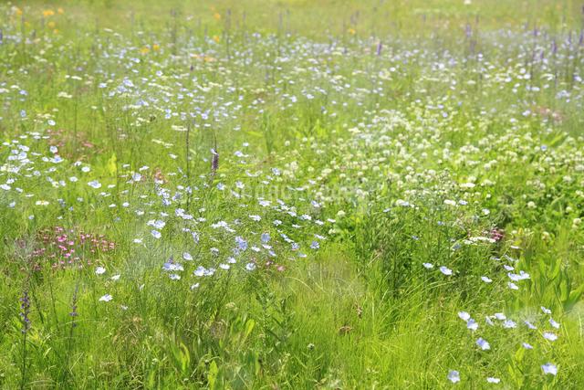 花咲く草原の写真素材 [FYI04135523]