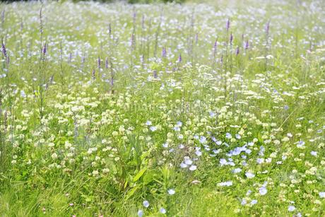 花咲く草原の写真素材 [FYI04135526]