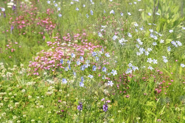 花咲く草原の写真素材 [FYI04135527]