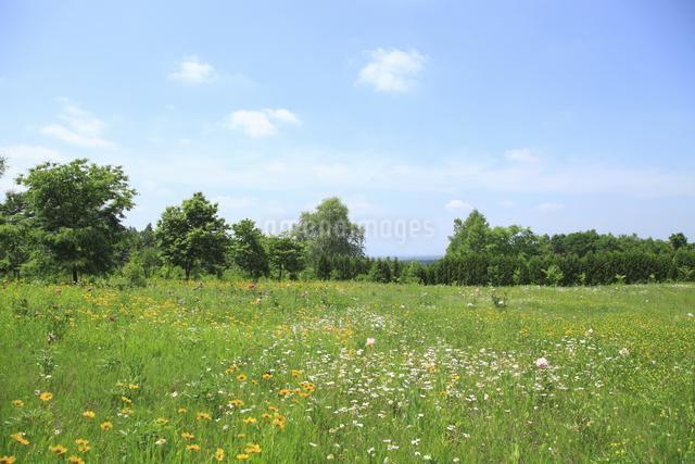 花咲く草原の写真素材 [FYI04135530]