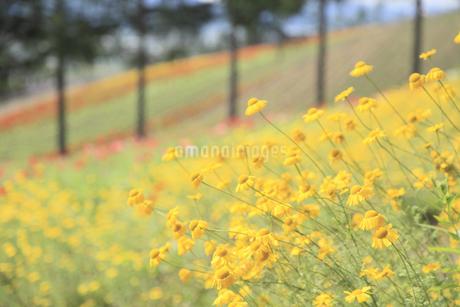 花畑の写真素材 [FYI04135627]