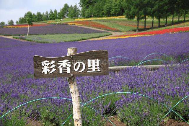 花畑の写真素材 [FYI04135630]
