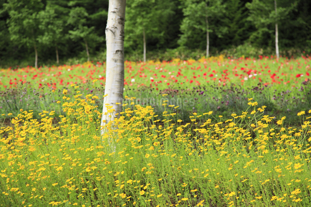 花畑の写真素材 [FYI04135652]