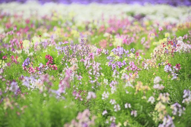 花畑の写真素材 [FYI04135654]