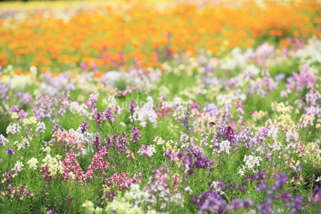花畑の写真素材 [FYI04135657]