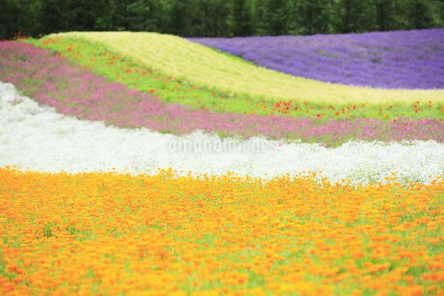 花畑の写真素材 [FYI04135666]