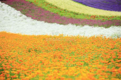 花畑の写真素材 [FYI04135667]