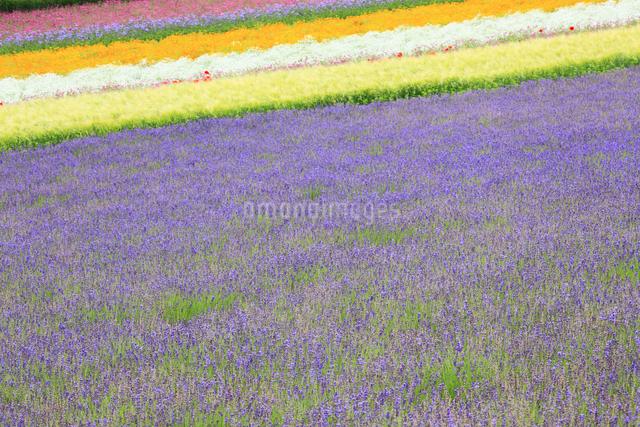 花畑の写真素材 [FYI04135672]