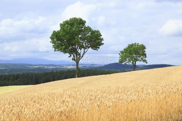 メルヘンの木の写真素材 [FYI04135680]
