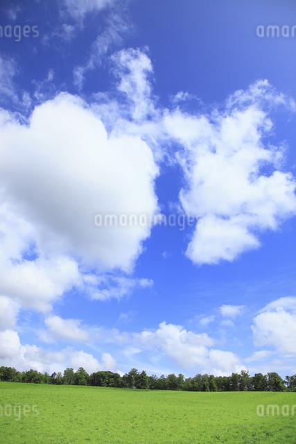 メルヘンの木と一本道の写真素材 [FYI04135688]