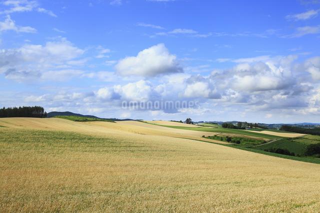 草原と青空の写真素材 [FYI04135689]