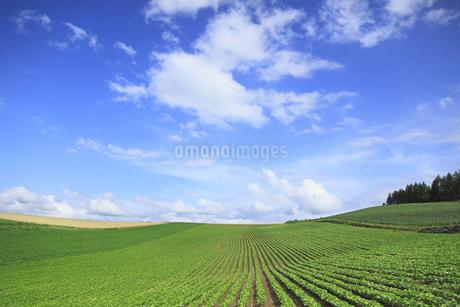 丘の風景の写真素材 [FYI04135690]
