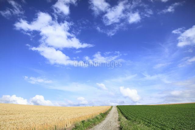 丘の風景の写真素材 [FYI04135692]