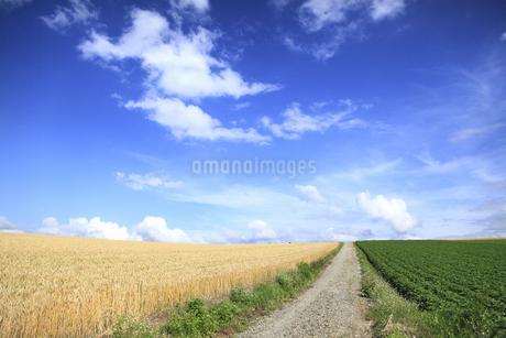 丘の風景の写真素材 [FYI04135693]
