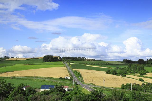 丘の風景の写真素材 [FYI04135696]