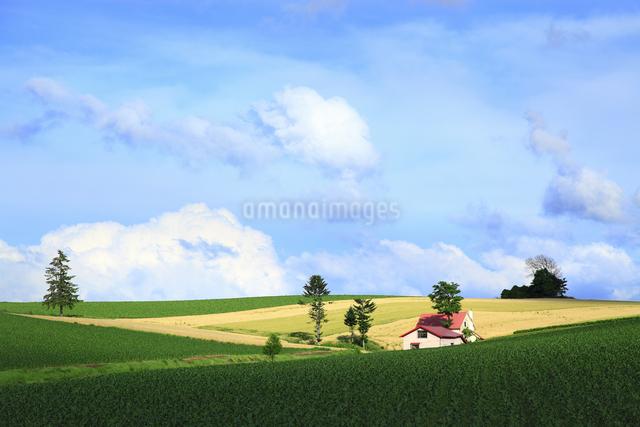 赤い屋根の家の写真素材 [FYI04135703]