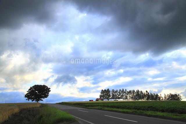 丘の風景の写真素材 [FYI04135707]