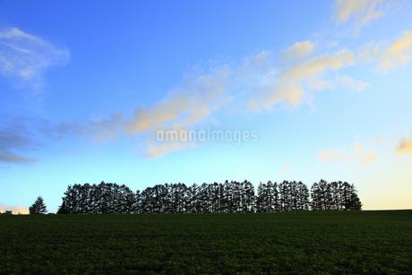 マイルドセブンの丘の写真素材 [FYI04135712]