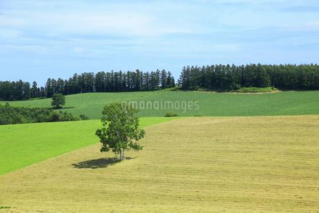 丘の風景の写真素材 [FYI04135719]