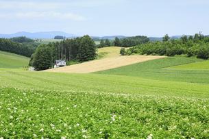 丘の風景の写真素材 [FYI04135722]