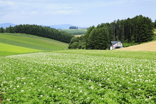丘の風景の写真素材 [FYI04135723]