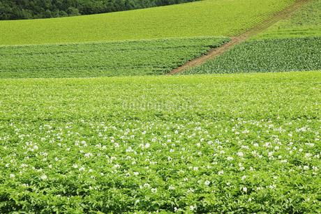 丘の風景の写真素材 [FYI04135724]