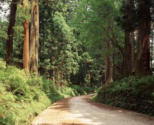 日光杉並木の写真素材 [FYI04135795]