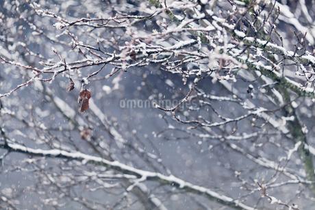 アメリカ、ヴァージニア州マナサスの冬景色の写真素材 [FYI04135808]