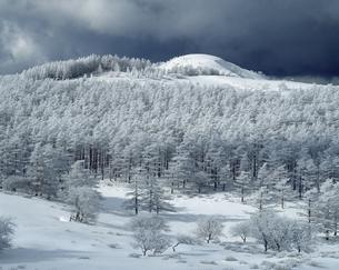 冬の美ヶ原高原の写真素材 [FYI04135853]
