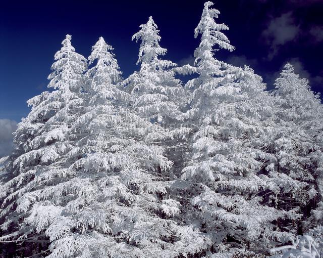 霧氷付くカラマツの写真素材 [FYI04135854]