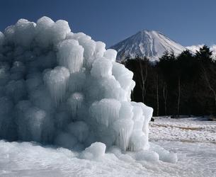 西湖野鳥の森公園の氷柱の写真素材 [FYI04135937]