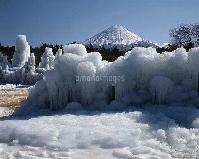 西湖野鳥の森公園の氷柱の写真素材 [FYI04135938]