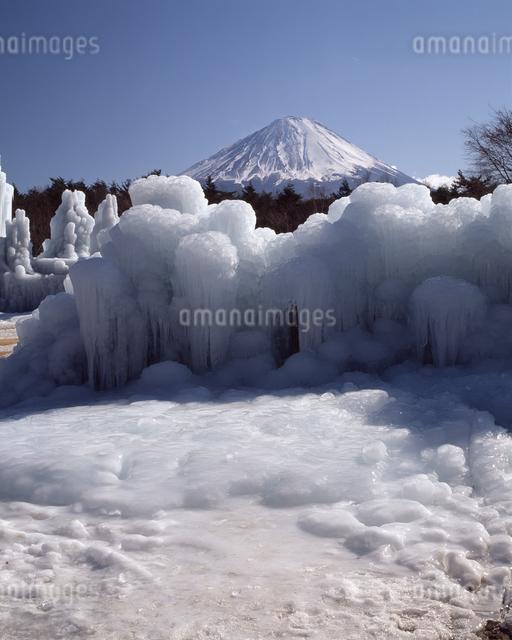 西湖野鳥の森公園の氷柱の写真素材 [FYI04135939]