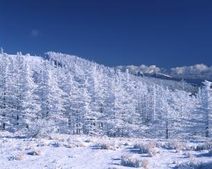 冬の美ヶ原高原の写真素材 [FYI04135954]