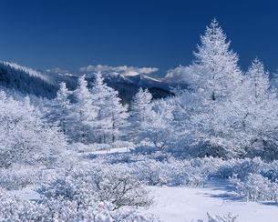 冬の美ヶ原高原の写真素材 [FYI04135955]