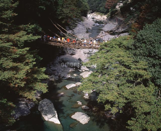 祖谷のかずら橋の写真素材 [FYI04136100]