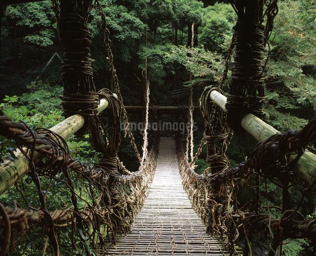 祖谷のかずら橋の写真素材 [FYI04136102]
