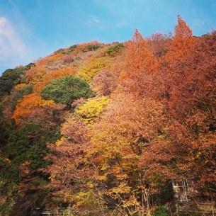 秋の山の写真素材 [FYI04136179]