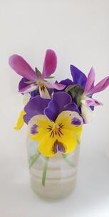 花の写真素材 [FYI04136231]