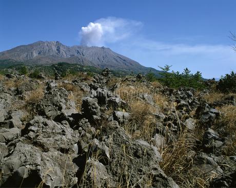 桜島 大正溶岩石の写真素材 [FYI04136322]