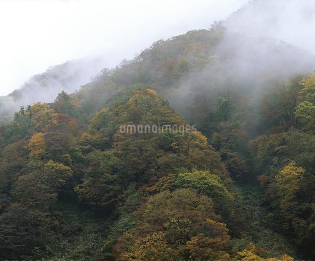 霧の山肌の写真素材 [FYI04136449]