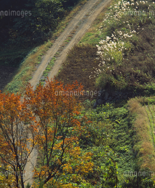 秋の白山スーパー林道の写真素材 [FYI04136453]