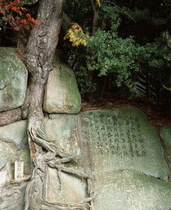 頼山陽文学碑と岩割りの松の写真素材 [FYI04136469]