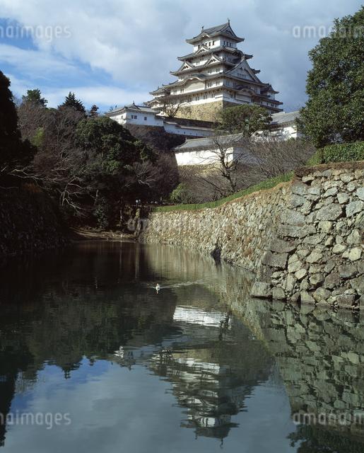 桜と姫路城(世界文化遺産)の写真素材 [FYI04136477]