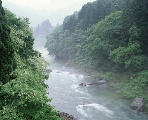 朝霧の利根川の写真素材 [FYI04136557]