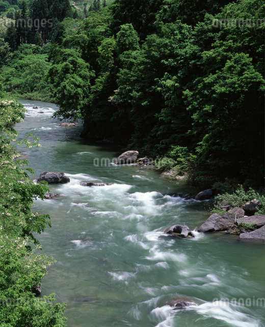 新緑の利根川の写真素材 [FYI04136563]