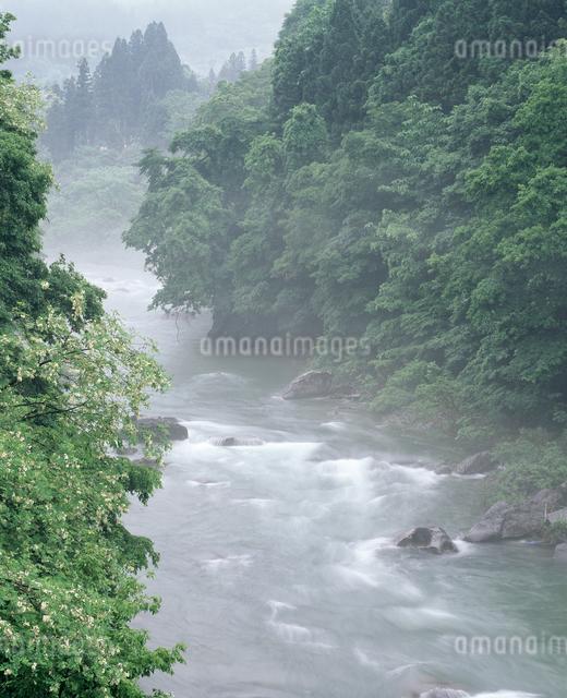 朝霧の利根川の写真素材 [FYI04136564]