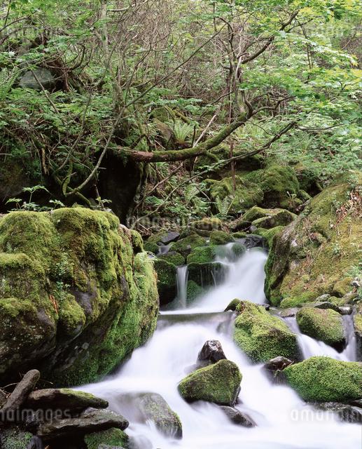 苔と流れの写真素材 [FYI04136567]