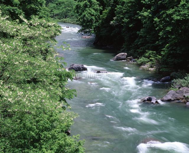 新緑の利根川の写真素材 [FYI04136577]